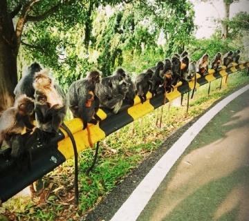 Река светлячков + обезьяны Лангуры + пещера Бату