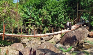 «Приключения в джунглях»